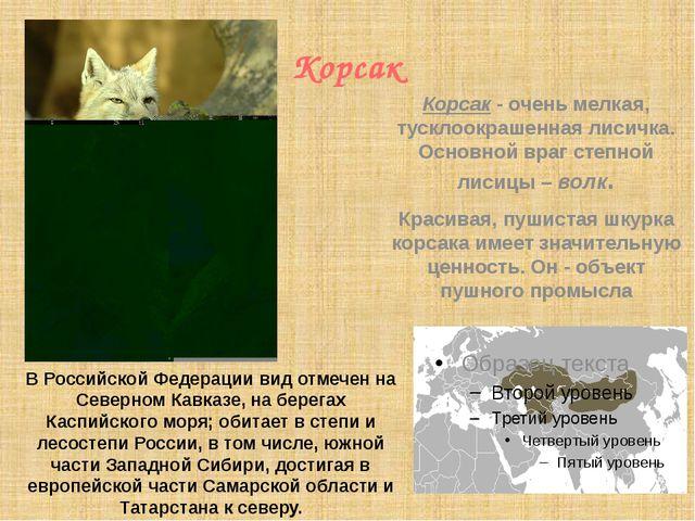 Корсак В Российской Федерации вид отмечен на Северном Кавказе, на берегах Ка...