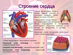 Строение сердца Сердце имеет четыре камеры – два предсердия и два желудочка.
