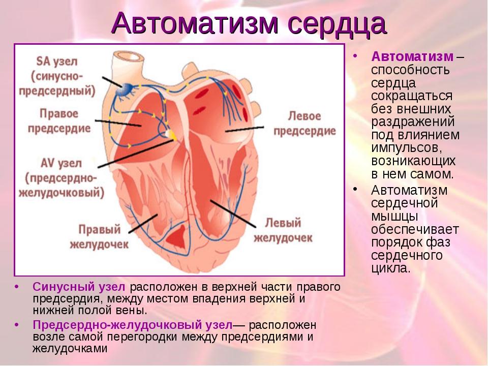 Автоматизм сердца Cинусный узел расположен в верхней части правого предсердия...