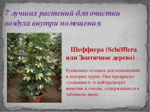 7 лучших растений для очистки воздуха внутри помещения Шеффлера (Schéfflera и