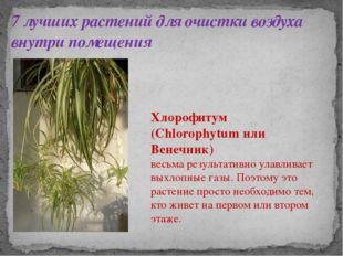 7 лучших растений для очистки воздуха внутри помещения Хлорофитум (Chlorophyt