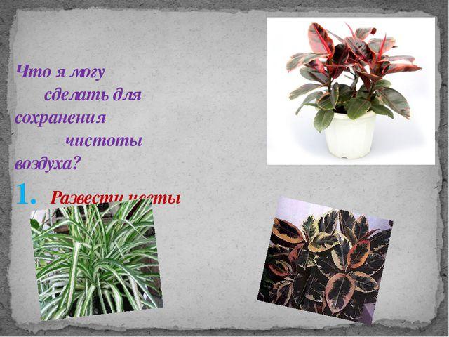 Что я могу сделать для сохранения чистоты воздуха? 1. Развести цветы