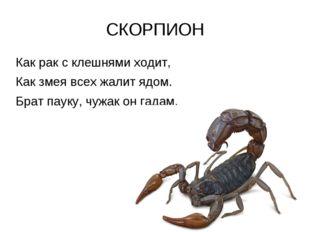 СКОРПИОН Как рак с клешнями ходит, Как змея всех жалит ядом. Брат пауку, чужа