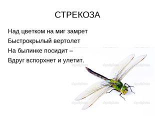 СТРЕКОЗА Над цветком на миг замрет Быстрокрылый вертолет На былинке посидит –
