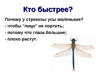"""Кто быстрее? Почему у стрекозы усы маленькие? - чтобы """"лицо"""" не портить; - по"""