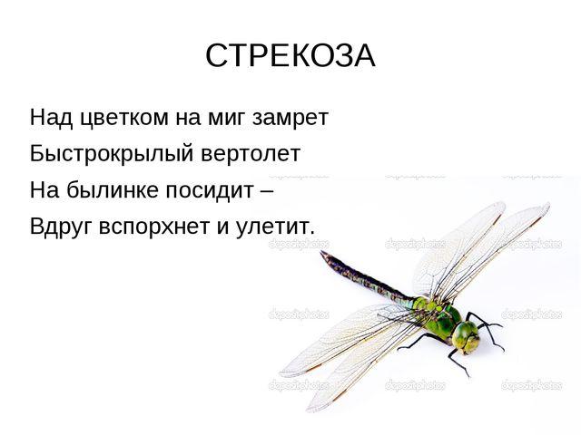 СТРЕКОЗА Над цветком на миг замрет Быстрокрылый вертолет На былинке посидит –...
