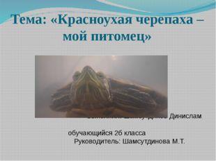 Тема: «Красноухая черепаха – мой питомец»