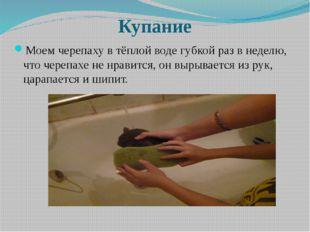 Купание Моем черепаху в тёплой воде губкой раз в неделю, что черепахе не нра