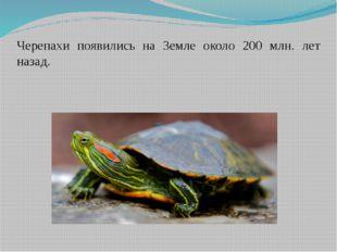 Черепахи появились на Земле около 200 млн. лет назад.