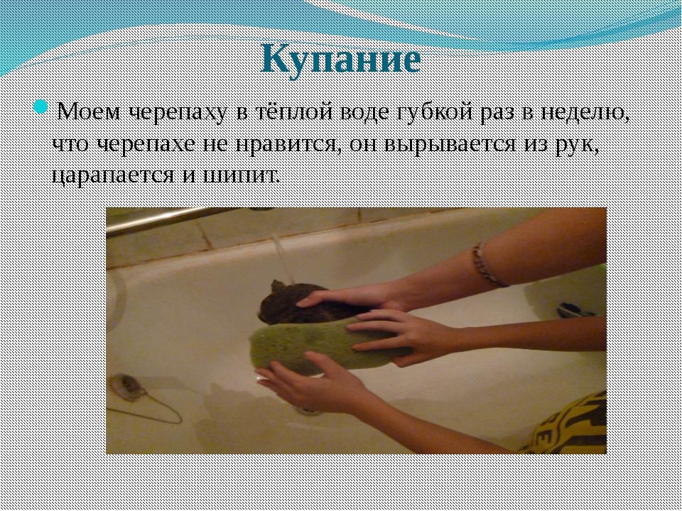 Купание Моем черепаху в тёплой воде губкой раз в неделю, что черепахе не нра...
