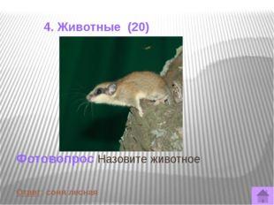 4. Животные (50) Немногие наши земляки могут вспомнить о своих встречах с так