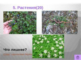 5. Растения(50) В Кировской области спороносные побеги этих растений «песты»