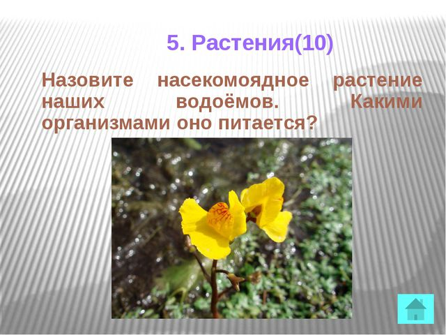 5. Растения(40) Ваш выигрыш увеличивается на 40 баллов