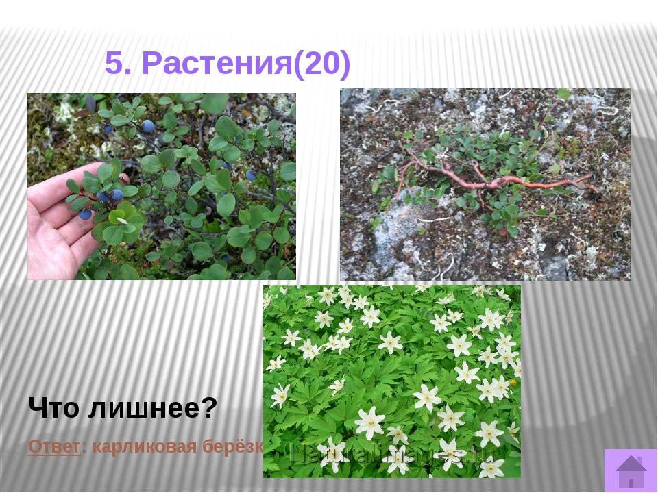 5. Растения(50) В Кировской области спороносные побеги этих растений «песты»...