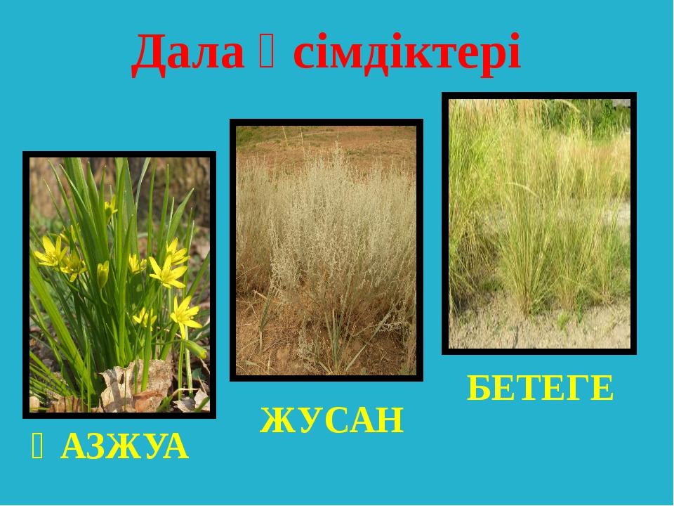 ҚАЗЖУА ЖУСАН БЕТЕГЕ Дала өсімдіктері