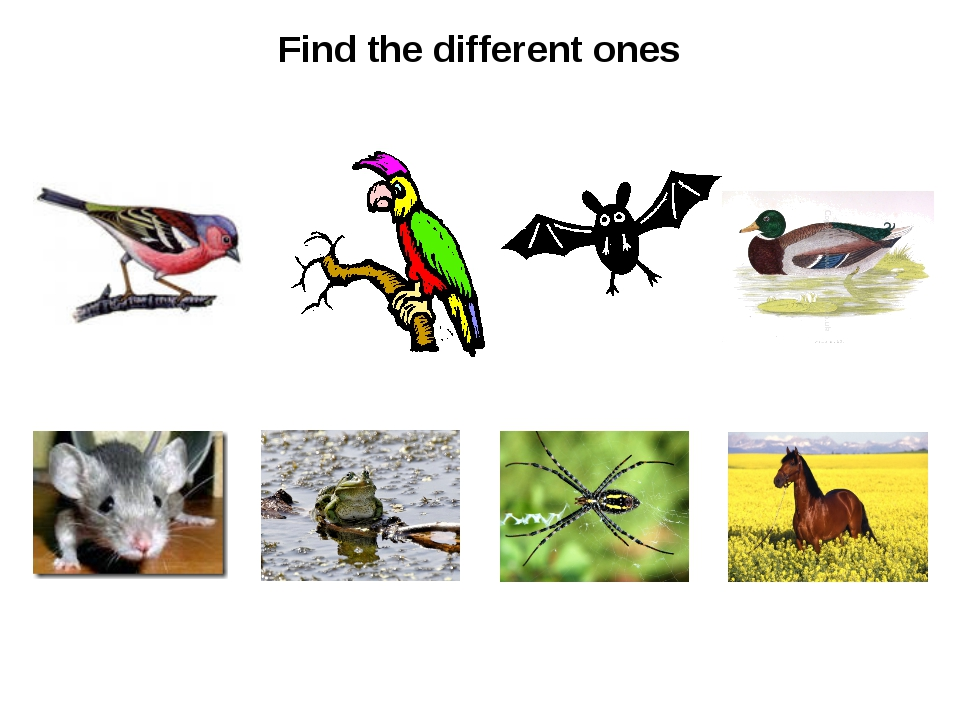 Find the different ones