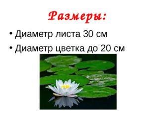 Размеры: Диаметр листа 30 см Диаметр цветка до 20 см Листья похожи на плавучи