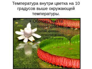 Температура внутри цветка на 10 градусов выше окружающей температуры. Цветки