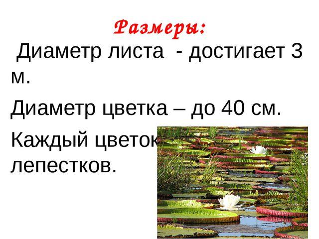 Размеры: Диаметр листа - достигает 3 м. Диаметр цветка – до 40 см. Каждый цве...