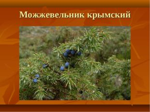 Можжевельник крымский