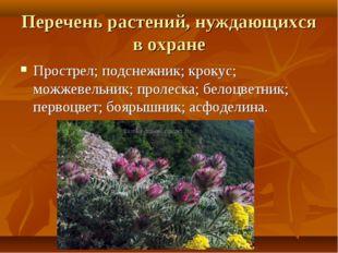 Перечень растений, нуждающихся в охране Прострел; подснежник; крокус; можжеве