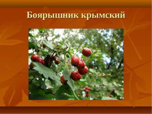 Боярышник крымский