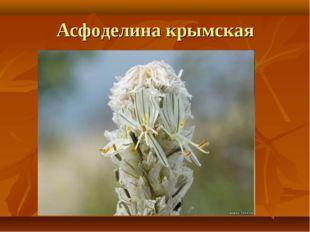 Асфоделина крымская