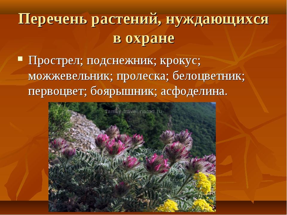 Перечень растений, нуждающихся в охране Прострел; подснежник; крокус; можжеве...