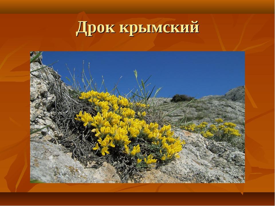 Дрок крымский