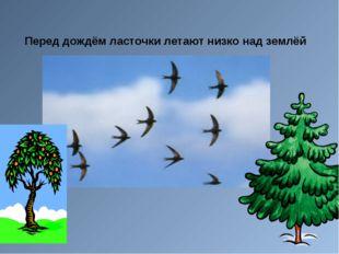 Перед дождём ласточки летают низко над землёй