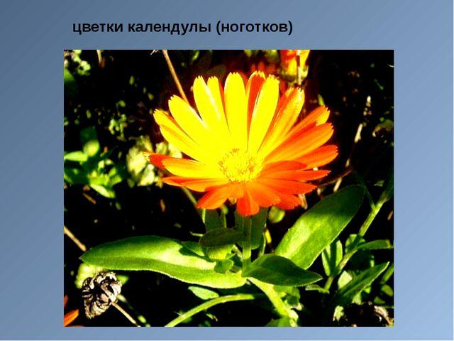 цветки календулы (ноготков)