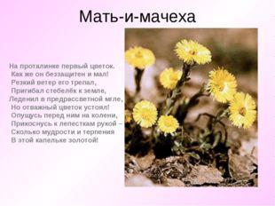 Мать-и-мачеха На проталинке первый цветок. Как же он беззащитен и мал! Резк