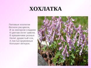 ХОХЛАТКА Лиловые хохлатки  Весною расцвели,     И за нектаром сладким