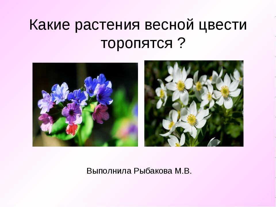 Выполнила Рыбакова М.В. Какие растения весной цвести торопятся ?