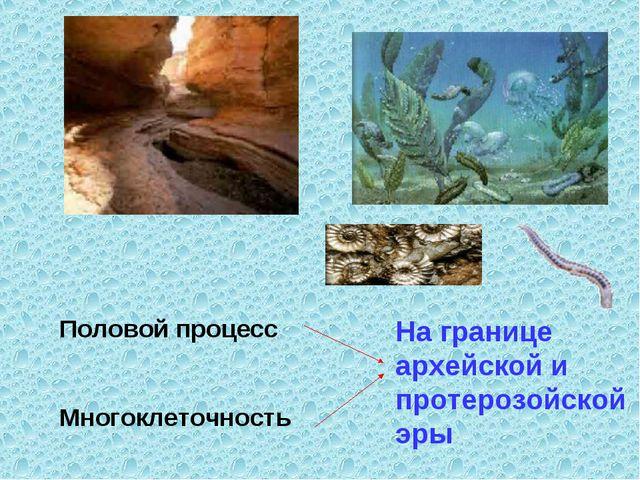 Половой процесс Многоклеточность На границе архейской и протерозойской эры