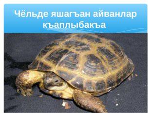 Чёльде яшагъан айванлар къаплыбакъа