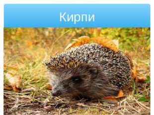 Кирпи