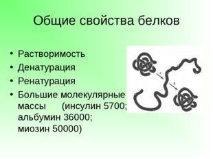 Общие свойства белков Растворимость Денатурация Ренатурация Большие молекуляр