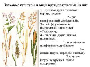 1 – гречиха (крупа гречневая: ядрица, продел), 2 – рис (шлифованный, дробленн