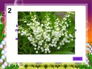 2 Именно эти цветы принес своей любимой герой песни Фадеевой и Фельцмана, а «