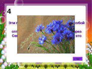 ОТВЕТ 4 Эти простые полевые цветы взял с собой в кабину самолёта В.П.Чкалов,
