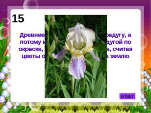 ОТВЕТ 15 Древние греки называли так радугу, а потому и цветок, схожий с радуг