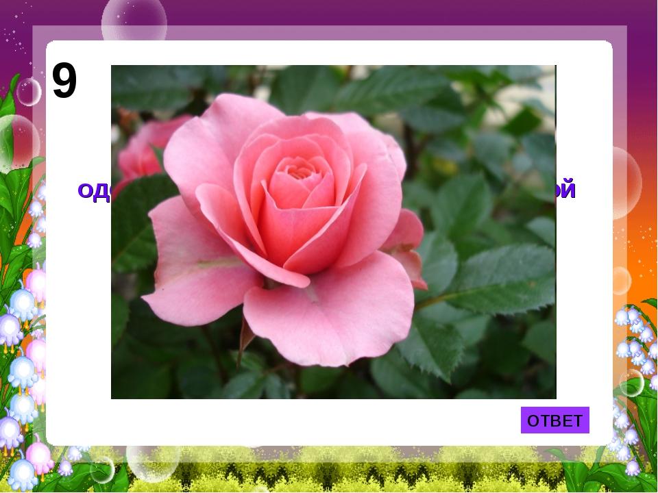 ОТВЕТ 9 Лепесток какого цветка служил одеялом Дюймовочке из одноименной сказк...