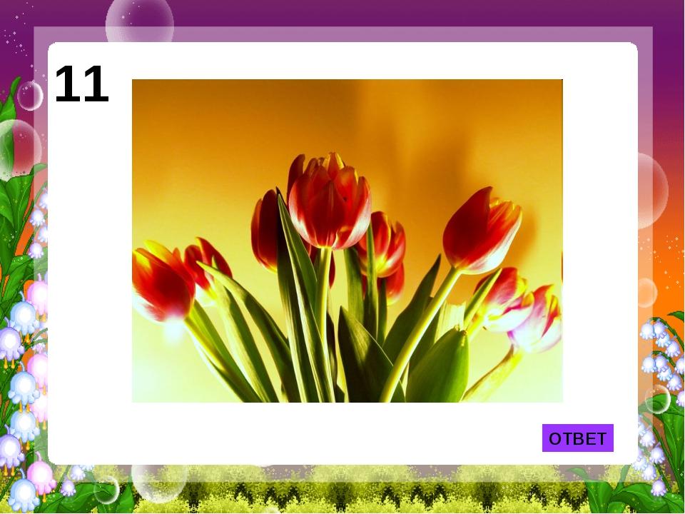 ОТВЕТ 11 Из этого цветка появилась на свет Дюймовочка.