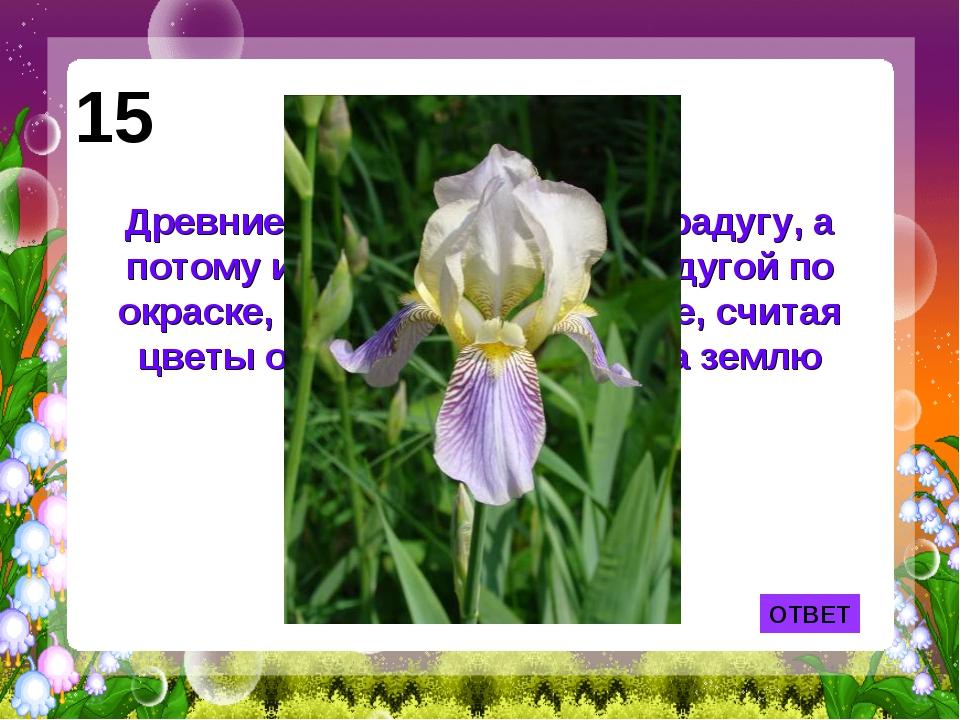 ОТВЕТ 15 Древние греки называли так радугу, а потому и цветок, схожий с радуг...