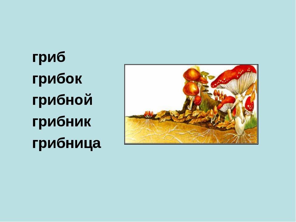 гриб грибок грибной грибник грибница