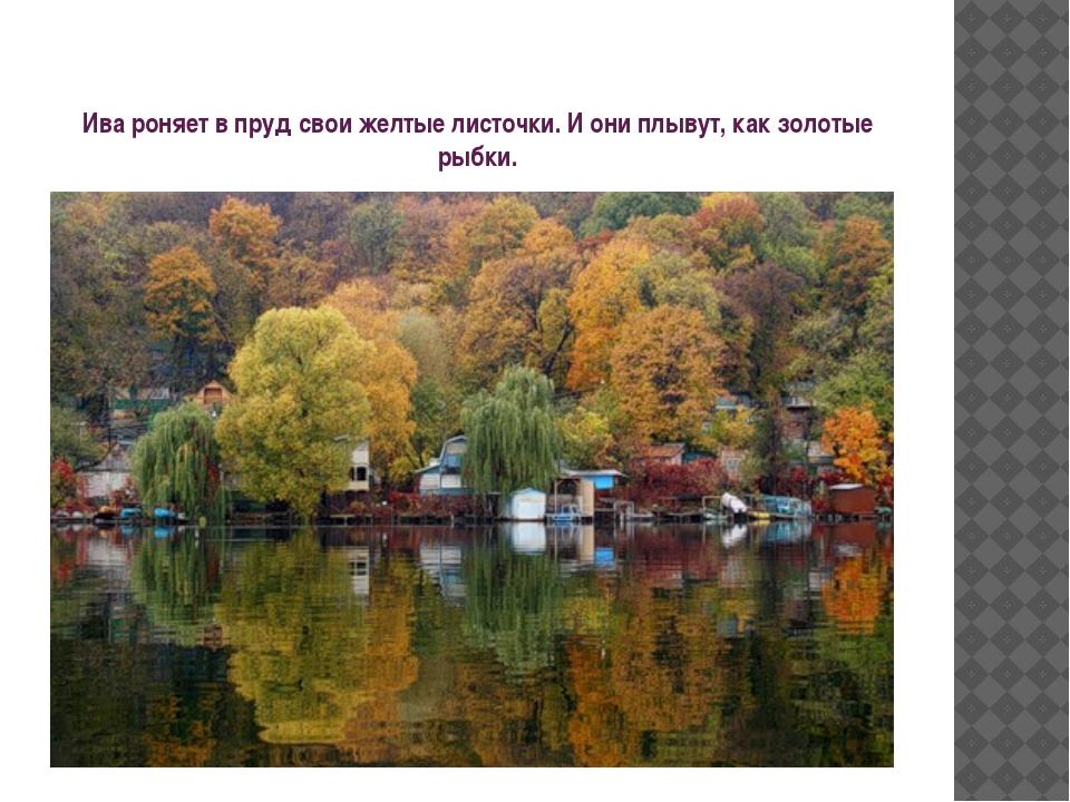 Ива роняет в пруд свои желтые листочки. И они плывут, как золотые рыбки.