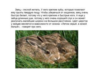 Заяц – лесной житель. У него крепкие зубы, которые помогают ему грызть тв