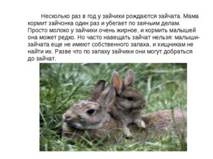 Несколько раз в год у зайчихи рождаются зайчата. Мама кормит зайчонка один