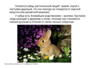 Выполнила: ученица 2 «А» Сайфулина Рената Питаются зайцы растительной пищей